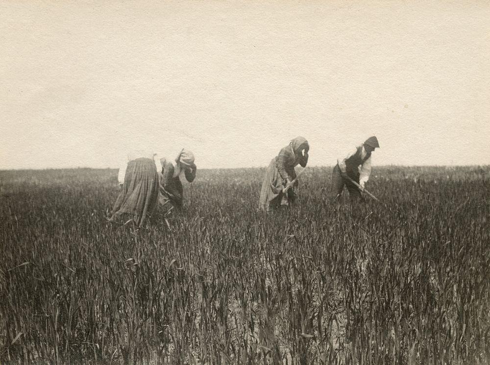 Laval Nugent, Contadini al lavoro nei campi, Lucania, XIX-XX secolo - Coll. Diciocia