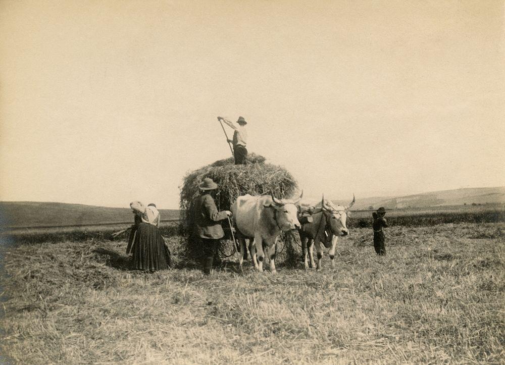 Laval Nugent, Scena di lavori campestri, Lucania, XIX-XX secolo - Coll. Diciocia