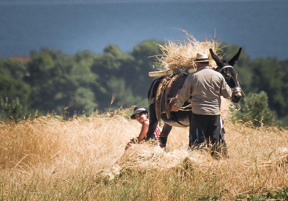 Le Colline del Grano © Nilo Domanico