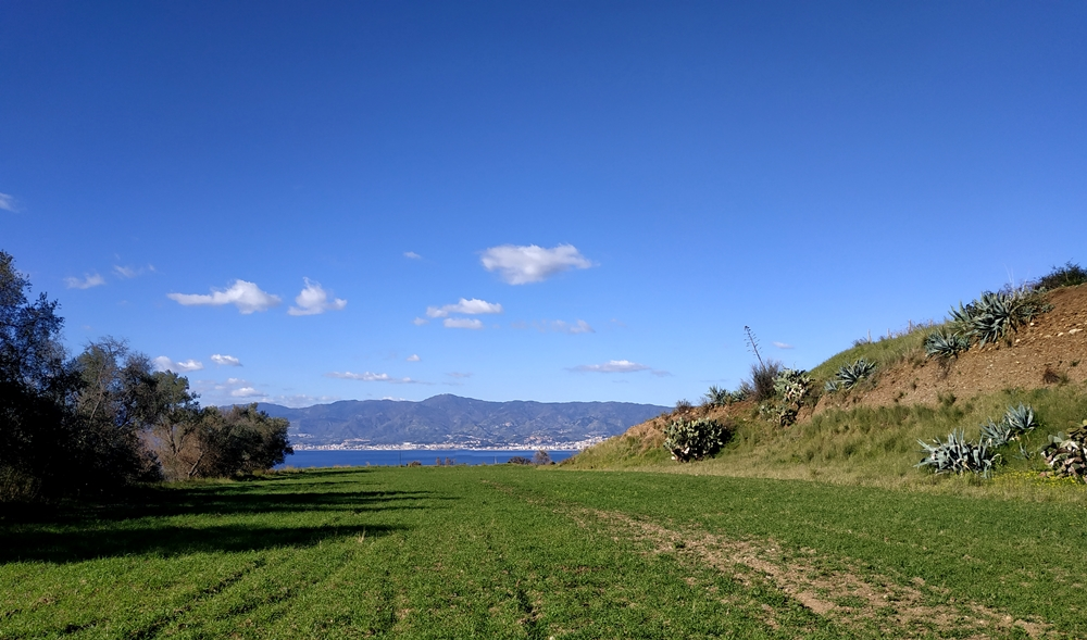 Agavi sulla costa dello Stretto di Messina, a Reggio Calabria. Qui Ventimiglia ne ha raccolto alcune foglie per ricavarne la fibra