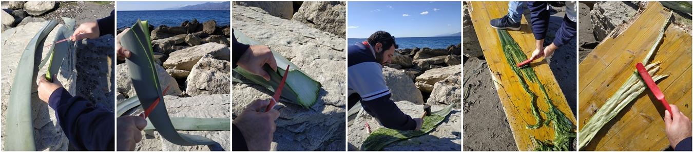 Fasi di lavorazione della fibra d'agave