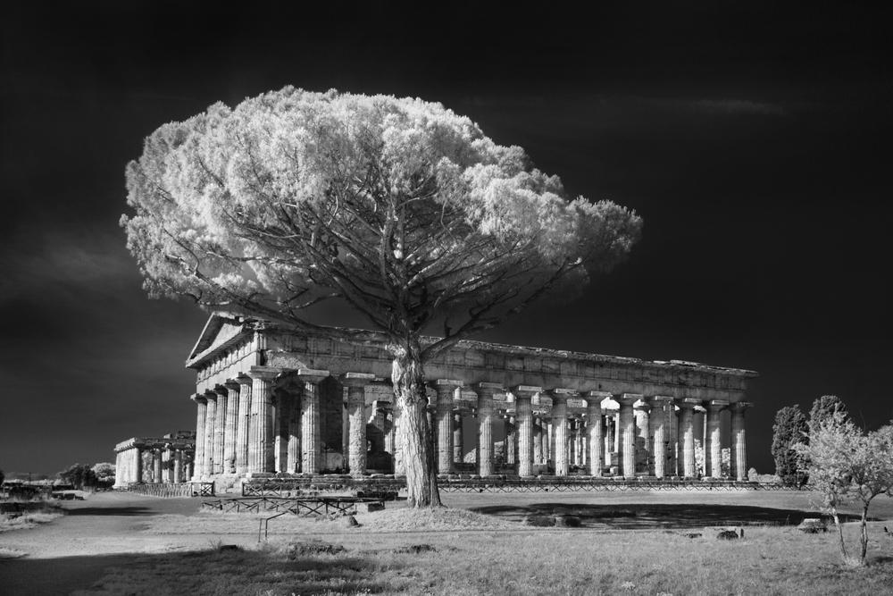 Santuario meridionale, Paestum - Ph. Marco Divitini