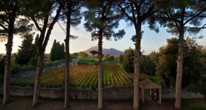 Pompei è viva. Torna la vendemmia nelle vigne dell'antica città vesuviana