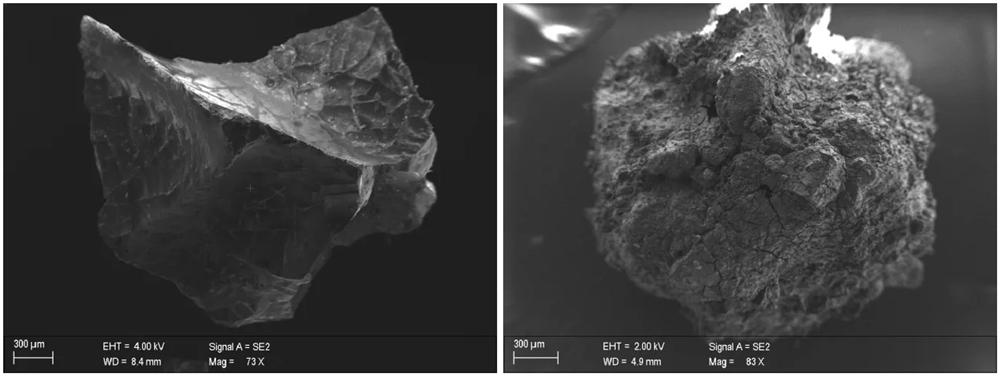Da sin.: a) neurone, insieme ai suoi assoni, visibile in un segmento vetrificato di tessuto cerebrale; b) frammento di midollo spinale vetrificato visto al microscopio - Ph. Pier Paolo Petrone | UniNapoli