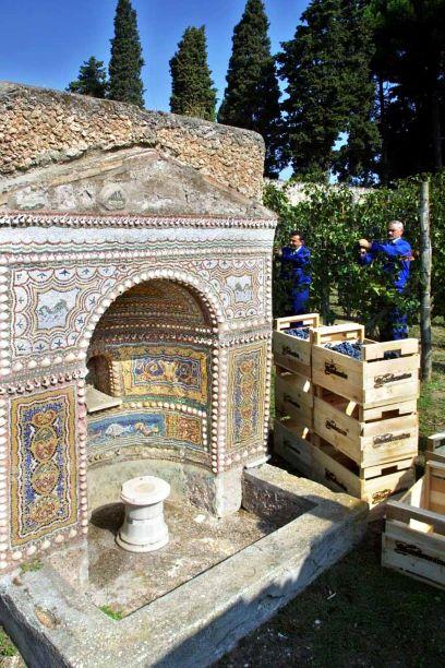 Vigneto urbano e vendemmia presso una delle domus pompeiane - Image by Parco Archeologico Pompei