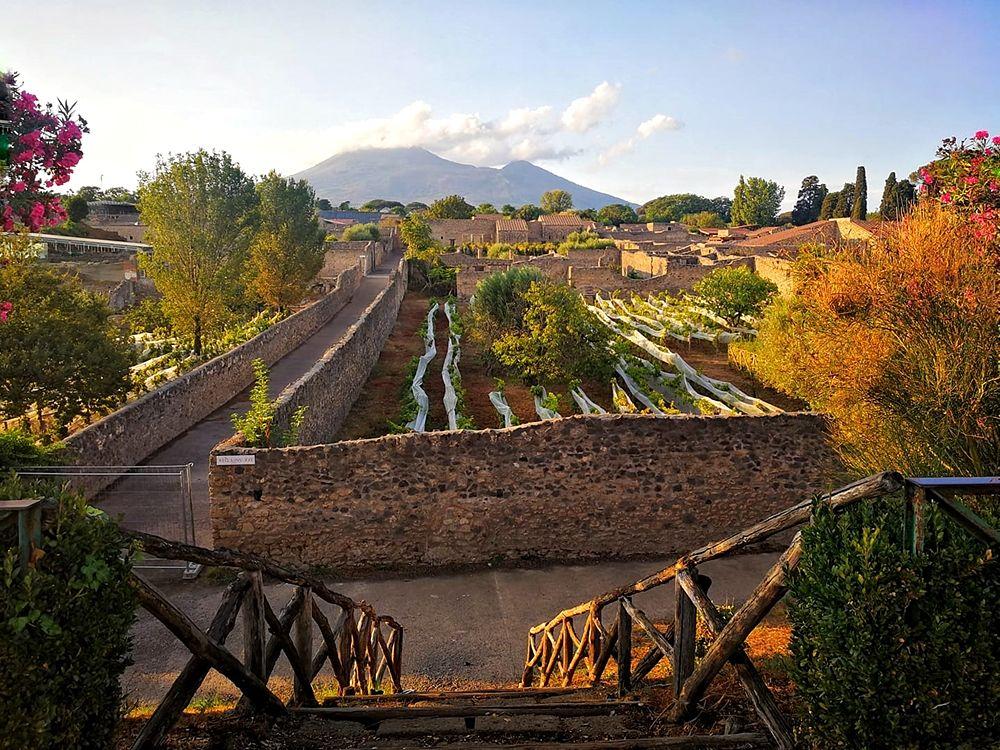 Strade e vigneti di Pompei, autunno 2020 - Image courtesy Laura Noviello ©