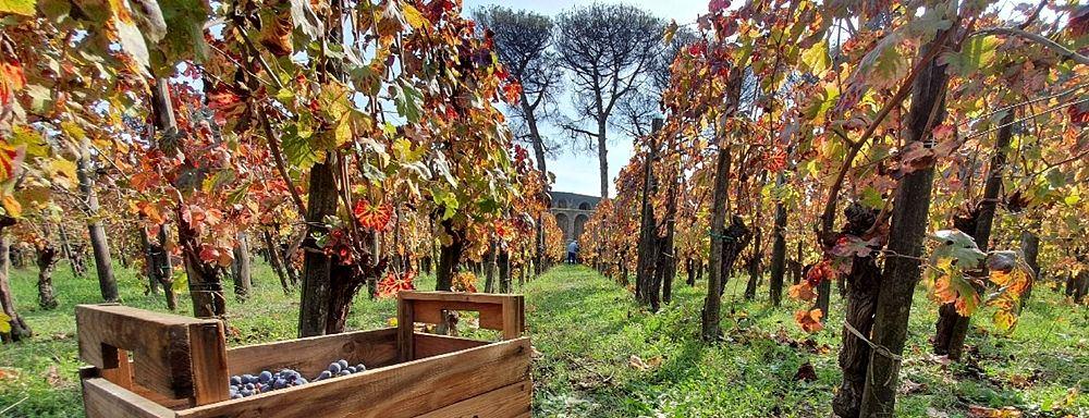 Tra i filari - Image by Parco Archeologico Pompei