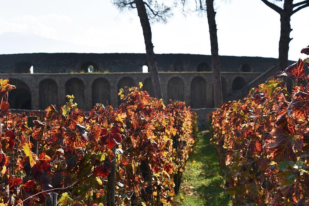 Vigneti presso l'Anfiteatro - Image by Parco Archeologico Pompei