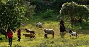 Di Terre e Tavole: dalla Calabria, la gastronomia emozionale di Adele Filice