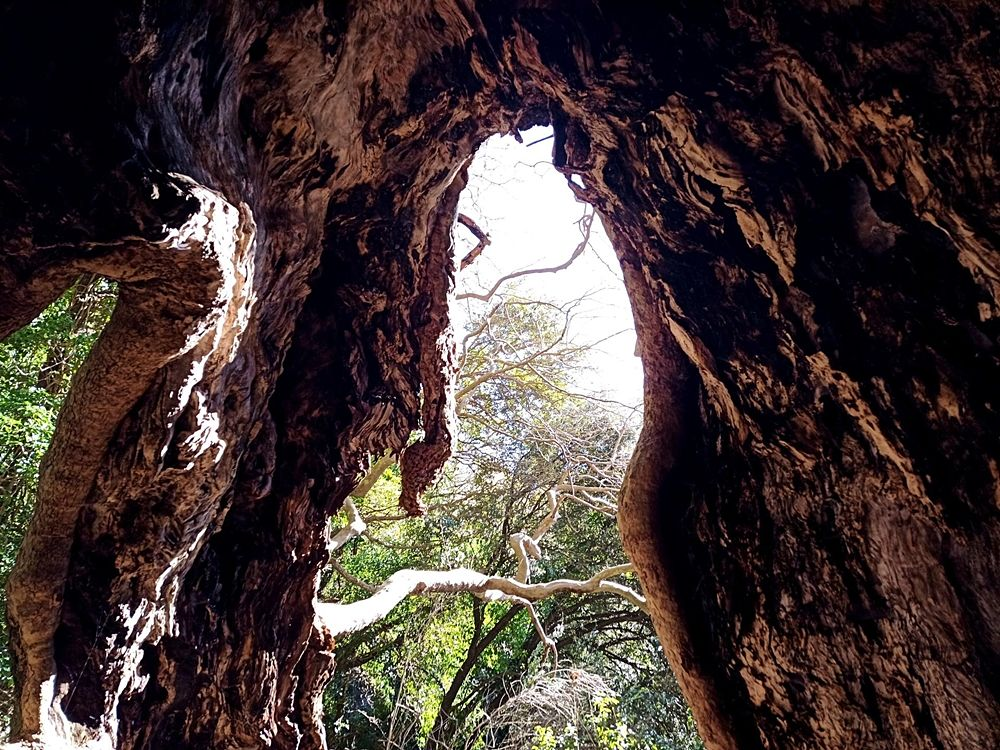 "Nella caverna del ""gigante"" - Image by Giant Trees Foundation"
