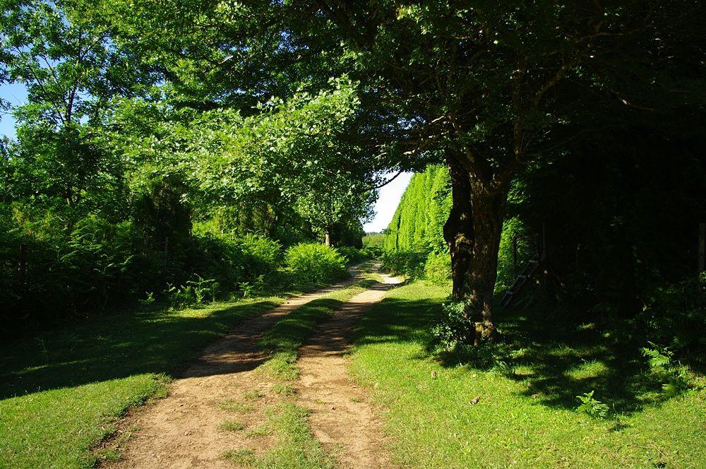 Tratto sud-nord di tracciato sterrato dell'antica via consolare che attraversava il Bruzio passando dal Dossone della Melìa - Ph. Lino Licari