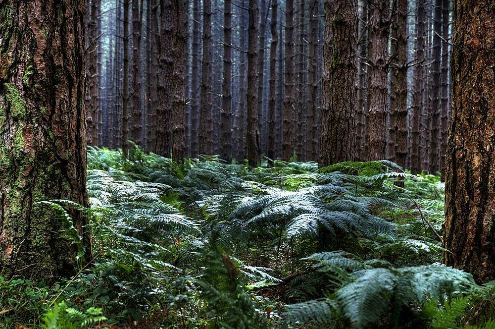 Fitti boschi nell'area di Zomaro, Aspromonte - Ph. Carlo Bonini