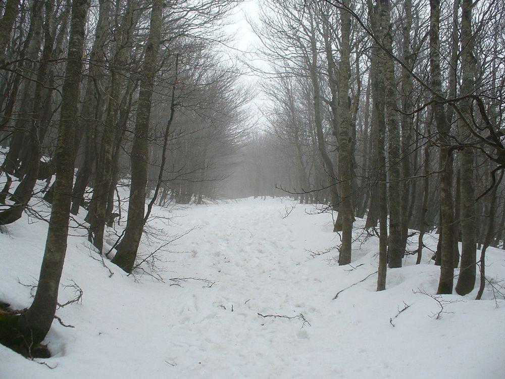 Un bosco innevato nell'area dello Zomaro che evoca le condizioni climatiche della battaglia tra i ribelli e i Romani di Crasso -