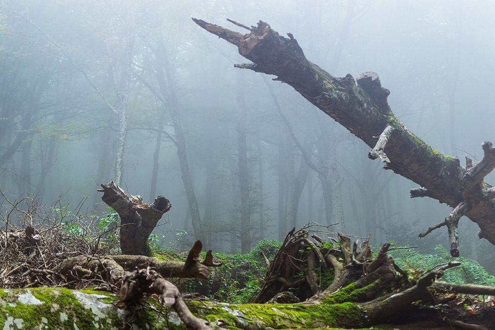 Scorcio della Foresta Umbra, promontorio del Gargano (Fg) - Ph.