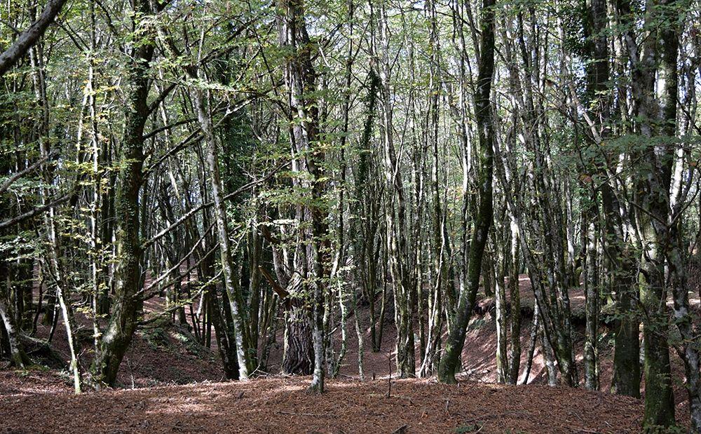 Tra gli alberi un tratto ovest del lungo fossato ritenuto riferibile allo sbarramento romano - Ph. Lino Licari