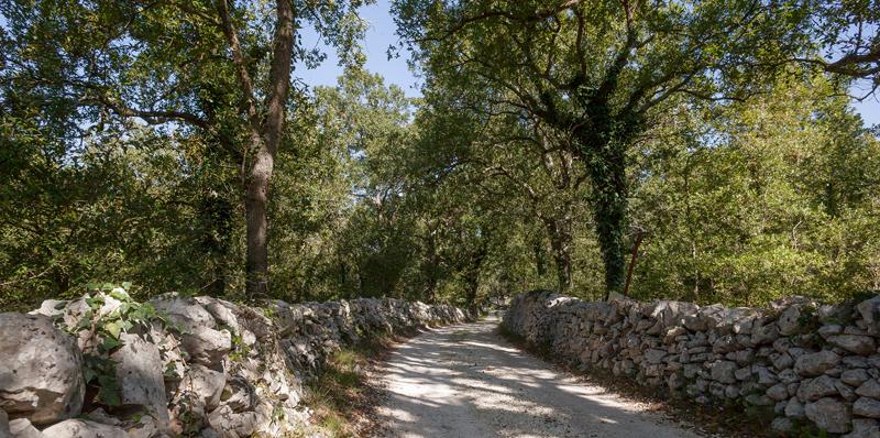 """Sentiero natura alla Masseria didattica """"Ferri"""", Ostuni (Br)"""