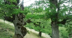 Scoperta eccezionale nel Parco dell'Aspromonte. Individuati relitti di foresta post-glaciale