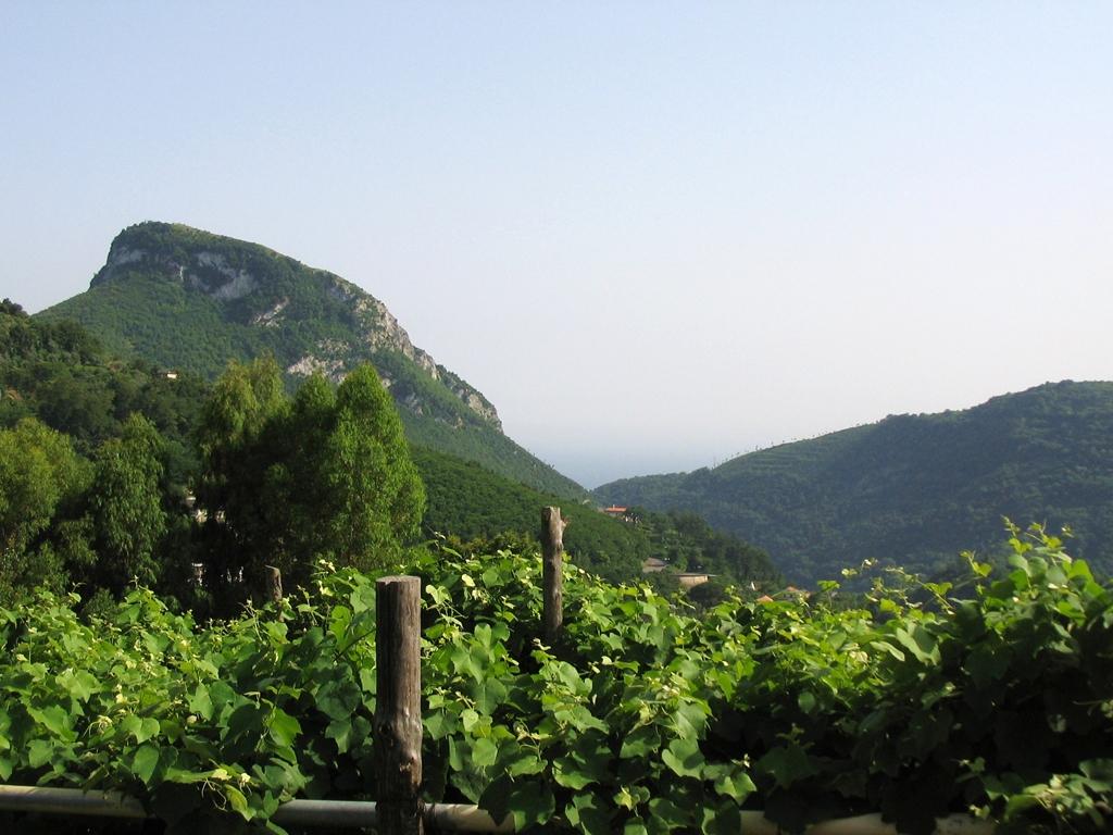 Cava_dei_Tirreni_vini