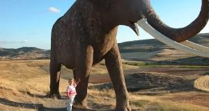 A Roccanova, in Basilicata, emersi i resti ultramillenari di un elefante preistorico