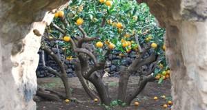 Giardino segreto degli aranci a Pantelleria. Scatto segnalato dalla siciliana Egle Petralia