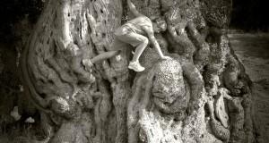 Free climbing sull'ulivo, di Nicola Amato