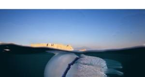 Alla Città della Scienza di Napoli la mostra fotografica NEAPOLIS UNDERWATER dedicata all'ambiente sottomarino del Mediterraneo
