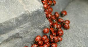 Racconta il tuo SUD | Convegno di coccinelle sul Monte Pollino, scatto segnalato dalla calabrese Maria Simeri