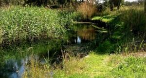 I luoghi del Mito | Il tarantino Galeso: il fiume che fece sognare i poeti, oggi in abbandono