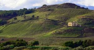 Natura domestica di Calabria, di Gianni Termine