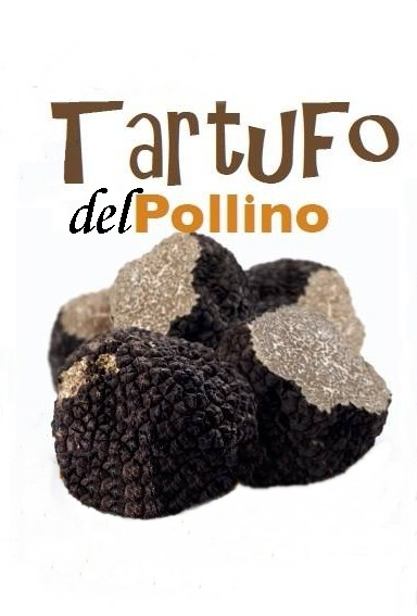Tartufo-pollino