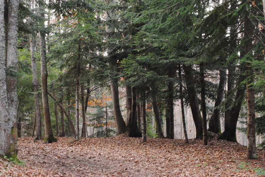 Basilicata – Bosco sul Monte Vulture nei pressi dei Laghi di Monticchio, Rionero in Vulture (Potenza)