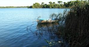 A rischio le pinete dei Laghi Alimini di Otranto. L'allarme degli ambientalisti, che denunciano speculazioni