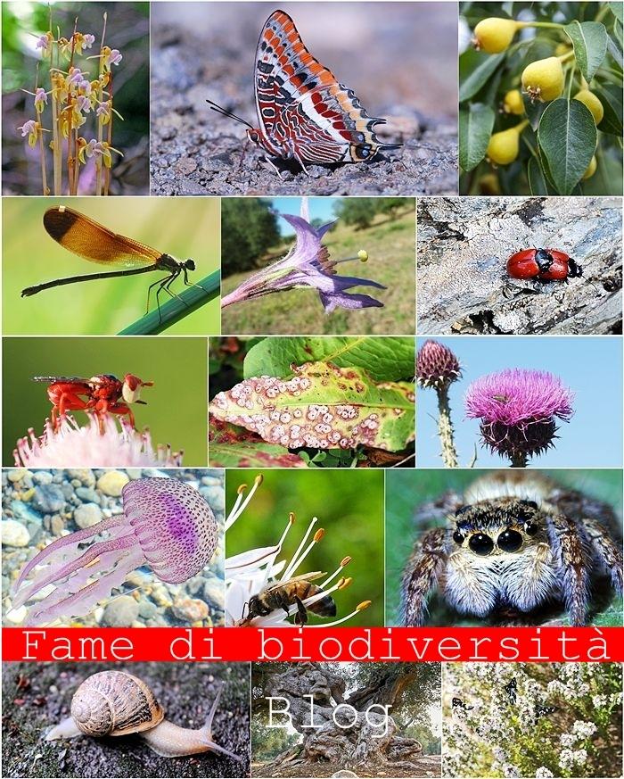 biodiversity_opt