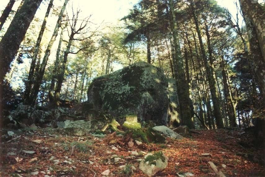 bosco archiforo