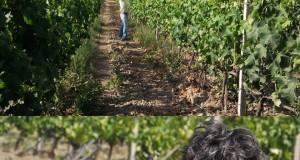Benvenuti nel regno del Cirò, il vino delle antiche Olimpiadi. Piace anche agli americani la produzione bio della Cantina 'A Vita di Cirò