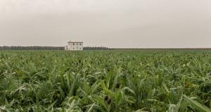 """""""Tesori"""" di economia agroalimentare a Trinitapoli fra carciofi, olio, latticini, vino e birra"""