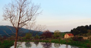 La piccola casa sul lago, di Gianni Termine