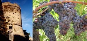 """Cirò Città del Vino. Il Lions Club """"Krimisa"""" lancia la segnaletica stradale turistico-culturale per valorizzare la produzione vinicola"""