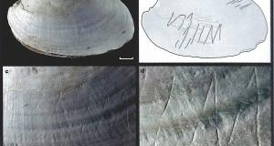 Ritrovate in Indonesia, su una conchiglia, le più antiche incisioni simboliche tracciate dall'uomo. Hanno 500 mila anni