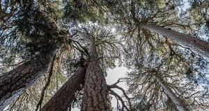 L'ultimo lembo dell'antica Silva Brutia è il bosco incantato di Fallistro