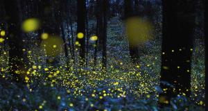 L'incanto delle Foresta di Cuma alla luce delle lucciole