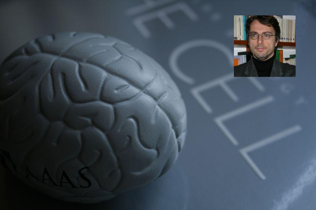 di marzo - brain