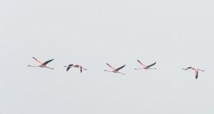 La zona umida delle Saline di Trinitapoli e Margherita di Savoia, oasi straordinaria per gli uccelli migratori