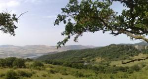 La magica oasi siciliana di Ficuzza, regno di caccia del Re Borbone