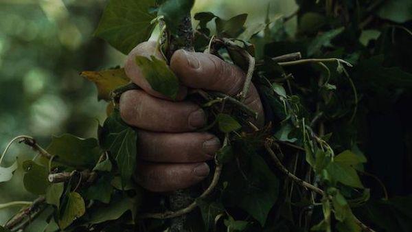 frame dal film 'alberi'