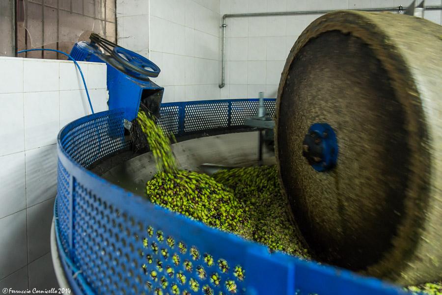 Fase della molitura delle olive nel frantoio Labianca di Trinitapoli – Ph. © Ferruccio Cornicello