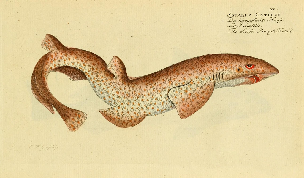ichthyologieouhi01bloc_0229