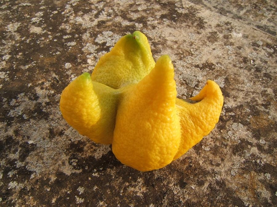 limone delle meraviglie