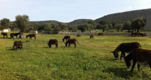 Masseria Russoli: il regno dell'asinello di Martina Franca diventa parco naturalistico. Nardoni: «Taranto recupera potenzialità perdute. Il Parco l'altra faccia di questa terra»