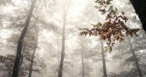 Il bosco lucano di Montepiano, di Francesco La Centra